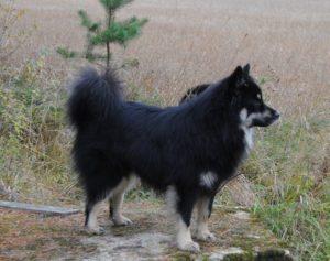 jykke-kaivolla2